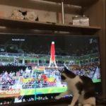 ژیمناستیک کار المپیکی