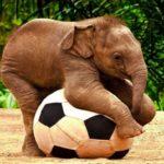فیل فوتبالیست