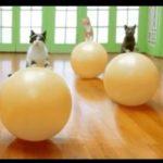 ورزش ایروبیک گربه ها
