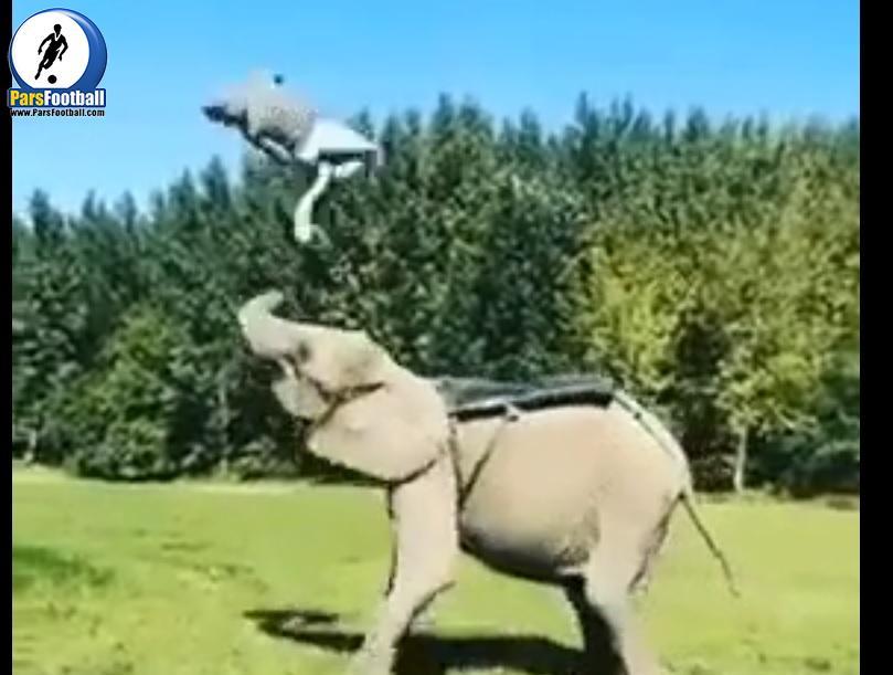 کلیپی جالب و حرکات عجیب از یک پسر که سعی دارد روی بدن فیل حرکات آکروباتیک انجام دهد