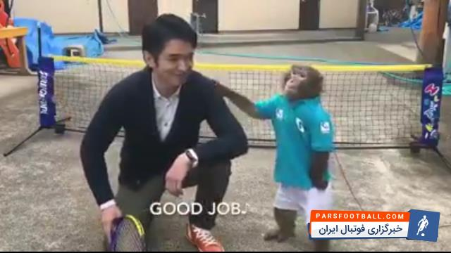 کلیپ جالب و تماشایی از حرکات دیدنی یک میمون تنیس باز ؛ پارس فوتبال