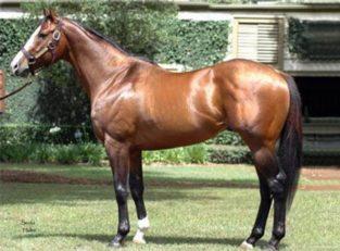 اسب کورس