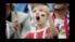 باز بینی همراه با لحظات جذاب جام کنفدراسیون ها 2017 روسیه