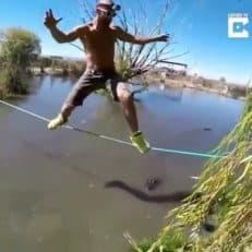 کلیپی تماشایی از بند بازی دلهره آور یک مرد پر دل و جرأت روی رودخانه ای از تمساح های گرسنه. این مرد جوان با انجام حرکات ترسناک و با خونسردی کامل از روی یک تاب نازک درحالی عبور می کند که زیر آن تعداد زیادی تمساح در حال شنا کردن هستند.