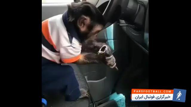 کلیپی از یک میمون باهوش که قصد روشن کردن موتور اتومبیل را داشت