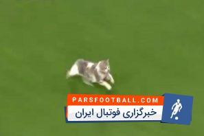 ورود یک گربه به زمین مسابقه در بازی الهلال و العین در لیگ قهرمانان آسیا