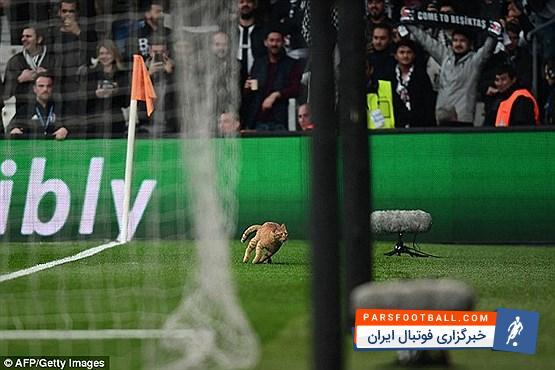 عکس ؛ گربه ای که بازی بایرن را در لیگ قهرمانان متوقف کرد!