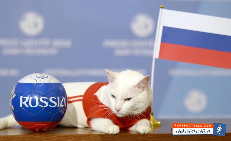 جام جهانی ؛ پیش بینی گربه پیشگو از برنده دیدار روسیه برابر عربستان در دیدار افتتاحیه