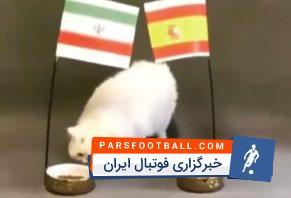 جام جهانی ؛ پیش بینی گربه های پیشگو از نتیحه دیدار تیم ملی ایران و اسپانیا در جام جهانی