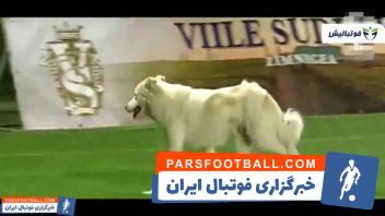 لحظات خنده دار و بامزه از حضور حیوانات مختلف در زمین فوتبال
