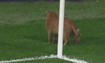 توقف بازی بایرن مونیخ - بشیکتاش به دلیل حضور گربه
