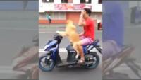 کلیپی جالب از موتورسواری یک سگ