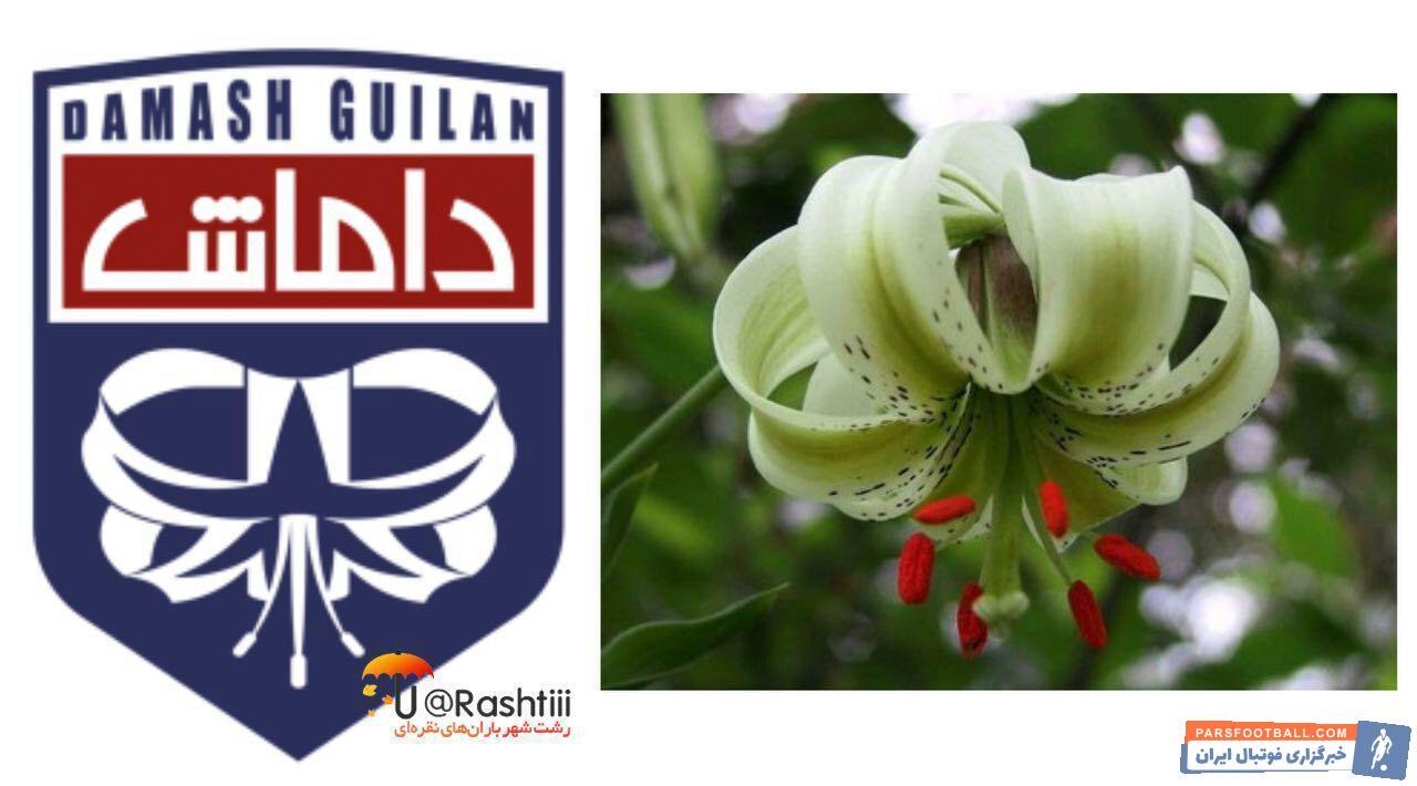 الگوبرداری لوگو باشگاه داماش گیلان از گل سوسن چلچراغ