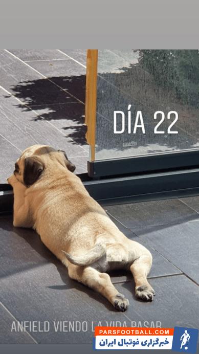 """مارکوس یورنته امروز تصویری در صفحه رسمی اش منتشر کرده که نشان می دهد او نام سگ خود را """"آنفیلد""""، به نام استادیوم مشهور لیورپول گذاشته است."""